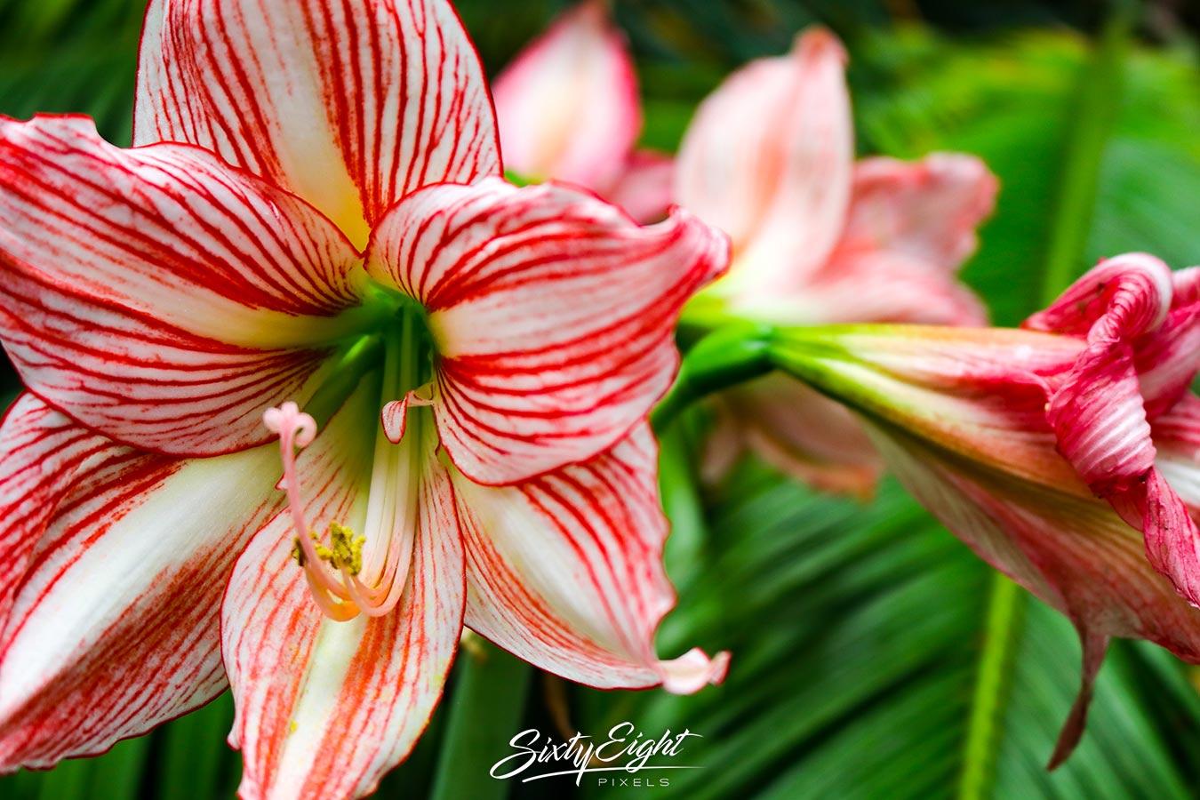 Fotos Botanischer Garten Erlangen