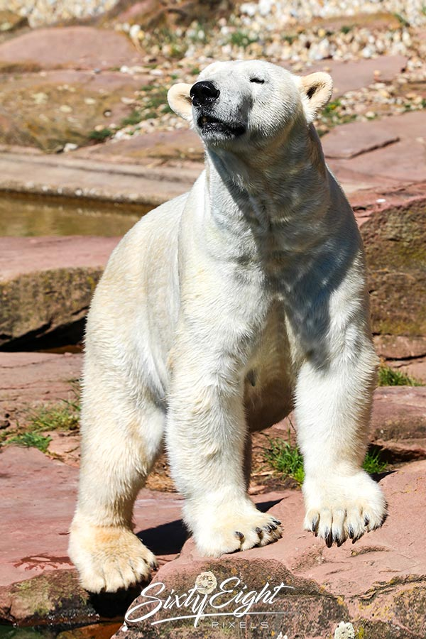 Tiergarten Zoo Nürnberg