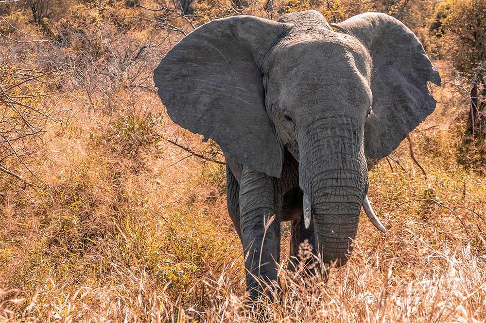 Wilderer machen sich die Geodaten der Fotos zunutze