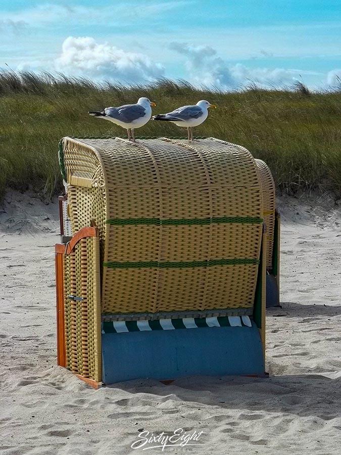 Zwei Möwen auf unserem Strandkorb