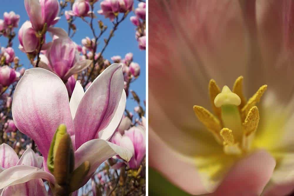 Auch im eigenen Garten findet man häufig schöne Frühlingsmotive
